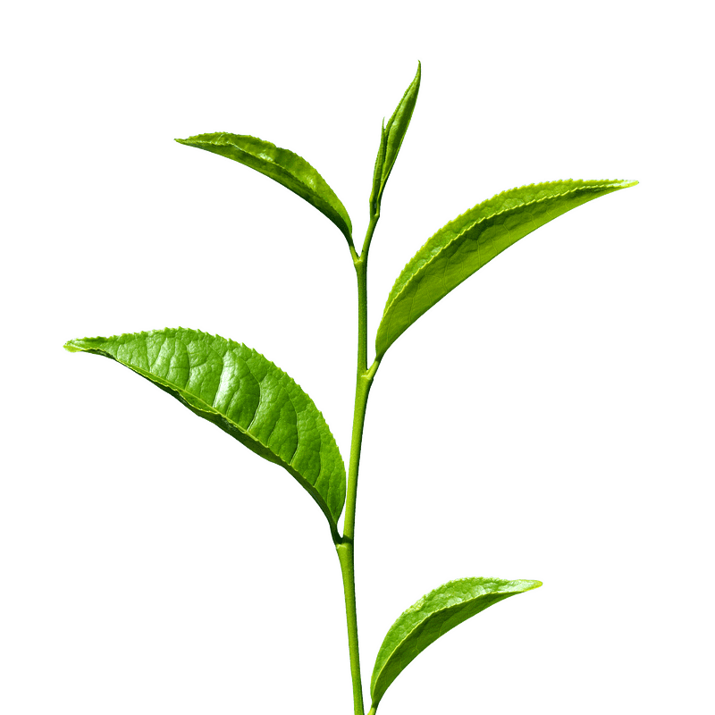 Loose Tea Leaf